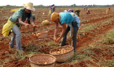 Integración de la economía cubana en el Caribe