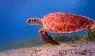 Proyecto criadero de tortugas marinas