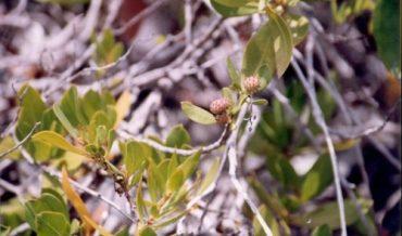 Los manglares, ecosistemas importantes