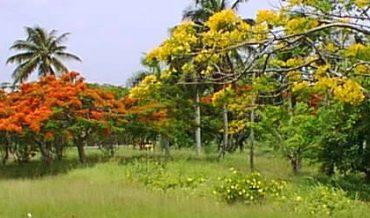 Valor ecológico de los árboles