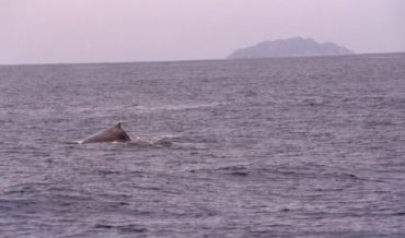 Ballenas en la costa de Puerto Rico