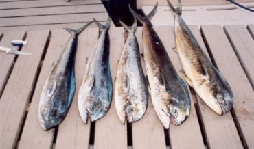 Peces marinos para pesca de orilla