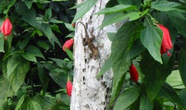 Especies nativas de Lagartijos