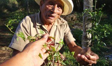 Sanación y prácticas curativas en el Caribe